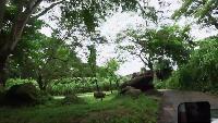 Alexander Kondrashov Все видео 1,000,000 подписчиков гигантские пираньи и сафари на бали