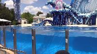 Лучшее в мире шоу с дельфинами.