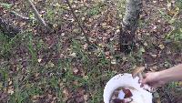 Шесть ведер грибов за два часа.