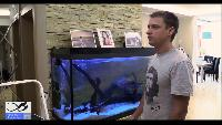 Советы по содержанию и обустройству аквариума.