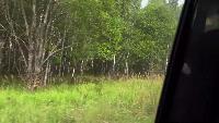 Alexander Kondrashov Все видео Тихая охота - в поисках белых грибов.