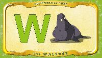 Мультипедия животных Немецкий алфавит Немецкий алфавит - Multipedia der Tiere. Buchstabe W - das Walross