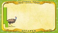 Мультипедия животных Українська абетка Українська абетка - Літера Ц - Цесарка