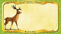 Мультипедия животных Українська абетка Українська абетка - Літера О - Олень