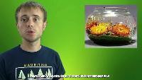 Roman Ursu Поделки своими руками Поделки своими руками - Как сделать прозрачные гелевые свечи в домашних условиях
