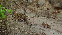 Тигр - охотник за партизанами